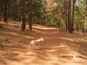 Greenhorn Park walk