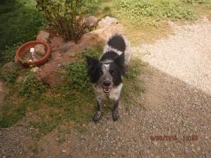 Piper my best girl dog friend.